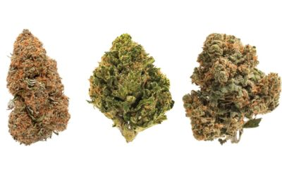 what does a high CBD but low THC strain do?